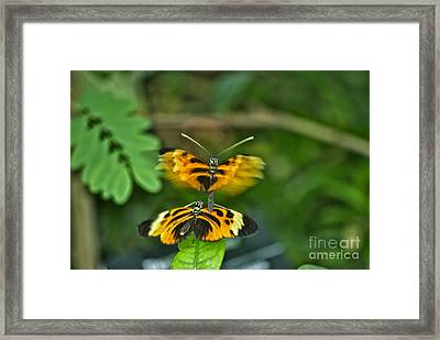 Framed Print featuring the photograph Gentle Butterfly Courtship 03 by Thomas Woolworth