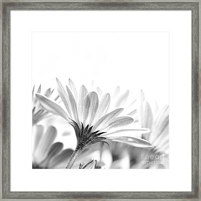 Gentle Daisy Flowers Framed Print by Anna Om