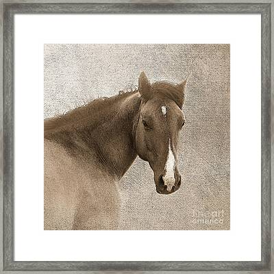 Gentle Devotion Framed Print by Betty LaRue