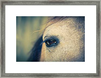Gentle Eye Framed Print