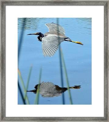 Gentle Flight Framed Print by Julie Cameron