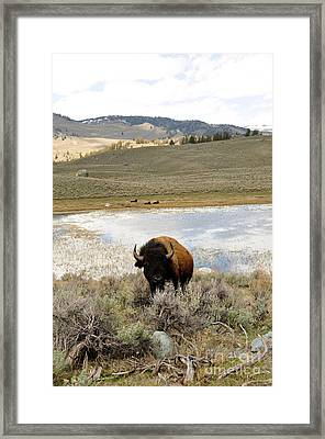 Gentle Giant Framed Print by Birches Photography
