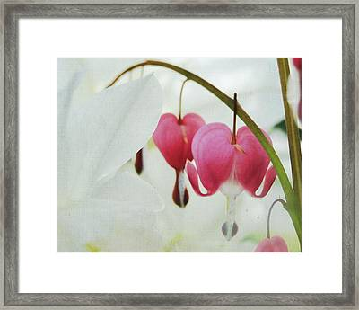 Gentle Heart Framed Print by Ginger Denning