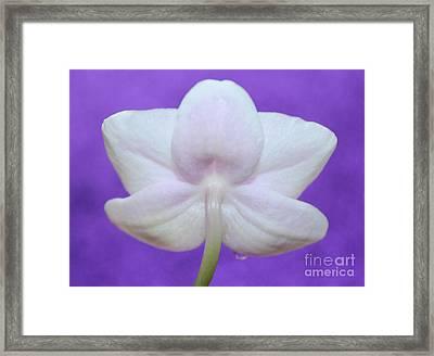 Gentle Orchid Framed Print