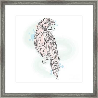 Gentle Parrot Vector. Trendy Shades Framed Print