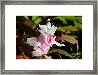 Gentle Pink Framed Print by Ramona Matei