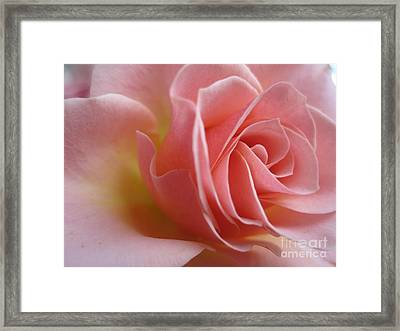 Gentle Pink Rose Framed Print