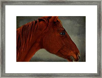 Gentle Red Framed Print by Linda Segerson