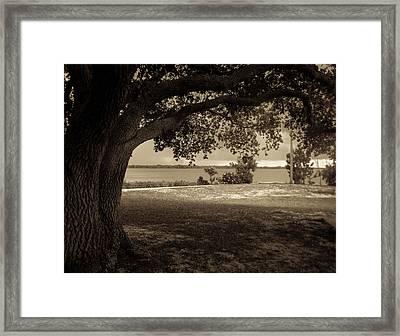 Gentle Shelter Framed Print