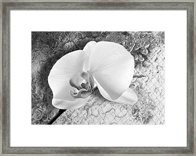 Gentle White Orchid Framed Print by Ron Regalado