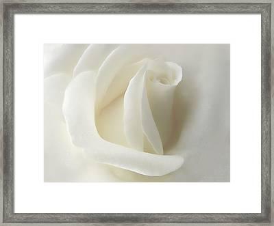 Gentle White Rose Flower Framed Print by Jennie Marie Schell