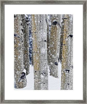 Gently Falling Forest Snow Framed Print by Don Schwartz