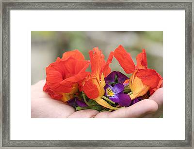Gently Held Flowers Framed Print by Carolyn Reinhart