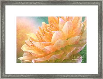 Gently Textured Dahlia  Framed Print
