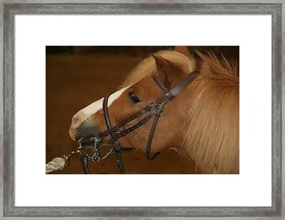Genuine Pony Framed Print by Jerome Lynch