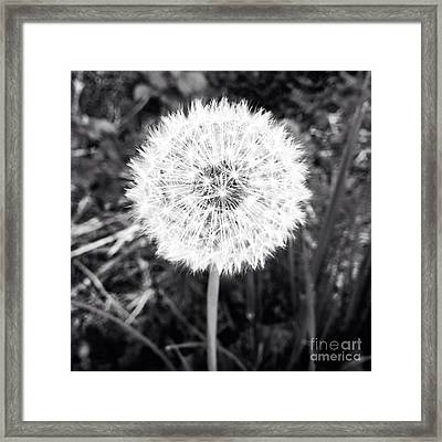Framed Print featuring the photograph Geodesicate by Vanessa Palomino
