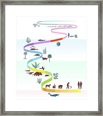 Geological Timescale And Life Framed Print