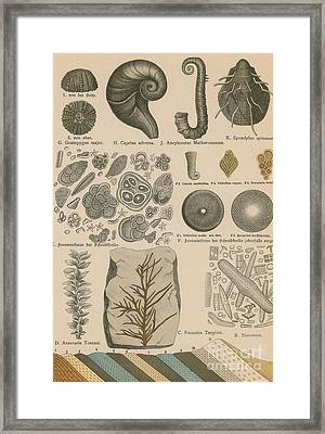 Geology And Paleontology 1886 Framed Print by Science Source