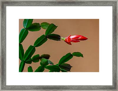 Geometric Cactus Framed Print by James Barber