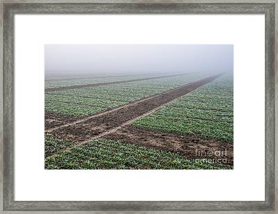 Geometry In Agriculture Framed Print by Hannes Cmarits