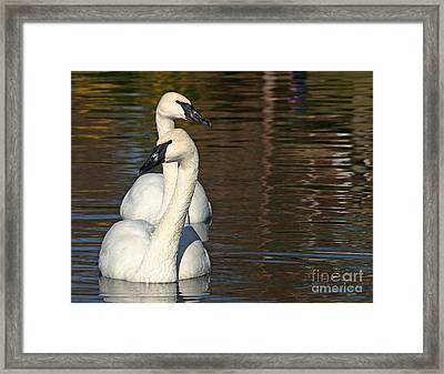 George And Gracie Framed Print by Liz Masoner