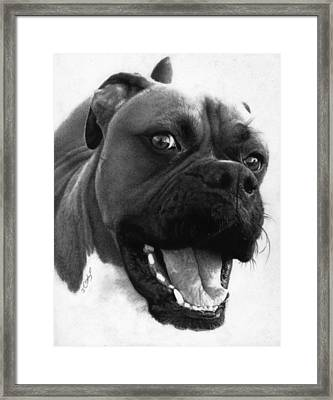 George - Boxer Dog Framed Print by Justin Clark