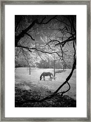 Georgia Horses Framed Print by Bradley R Youngberg