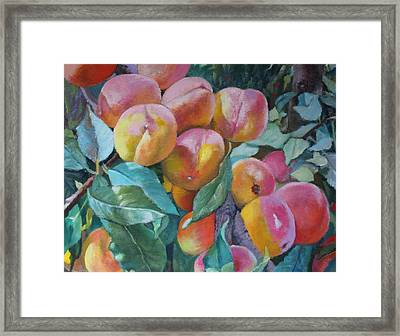 Georgia Peachers Framed Print by Michael McDougall