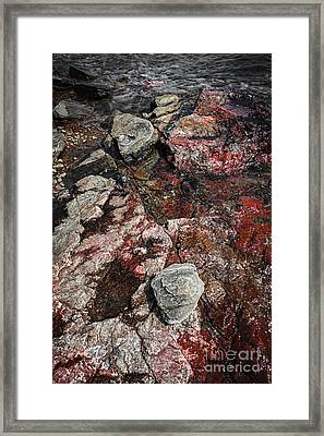 Georgian Bay Rocks Abstract II Framed Print by Elena Elisseeva