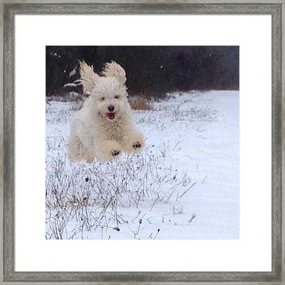 Georgie Doesn't Run Like A Normal Framed Print