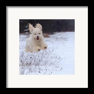 Dog Framed Prints