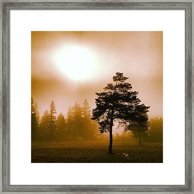 Morning Light Framed Print by Blenda Studio