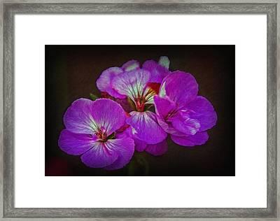 Framed Print featuring the photograph Geranium Blossom by Hanny Heim