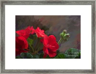Geranium In Red Framed Print