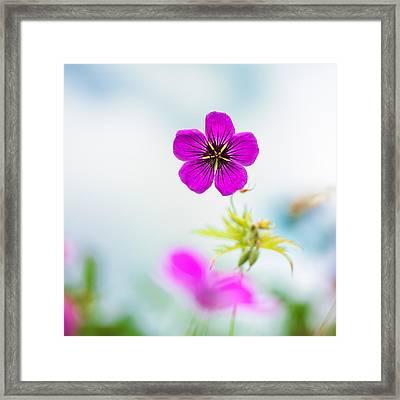 Geranium Summer Framed Print