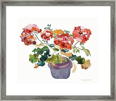 Geranium Watercolour Framed Print by Barbara McMahon
