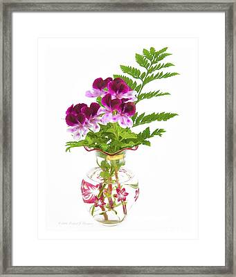 Geranium 'witchwood' Framed Print