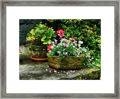 Geraniums And Lavender Flowers On Stone Steps Framed Print by Susan Savad