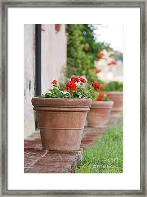 Geraniums In A Terracotta Pot Framed Print