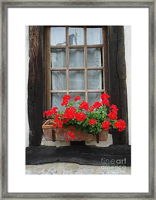 Geraniums In Timber Window Framed Print by Barbie Corbett-Newmin