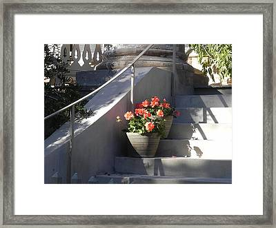 Geraniums Look Better In Beaufort Framed Print by Patricia Greer