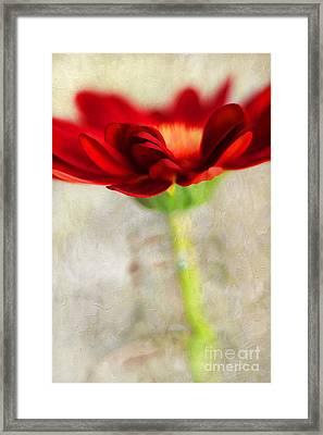Gerber Beauty Framed Print