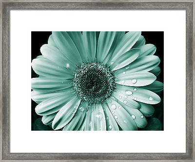 Raindrops Gerber Daisy Flower Teal Photograph By Jennie
