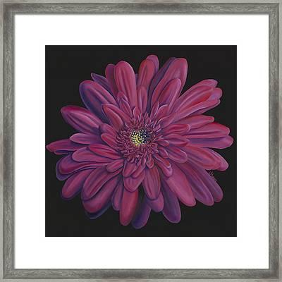 Gerber Daisy Framed Print by Kerri Meehan