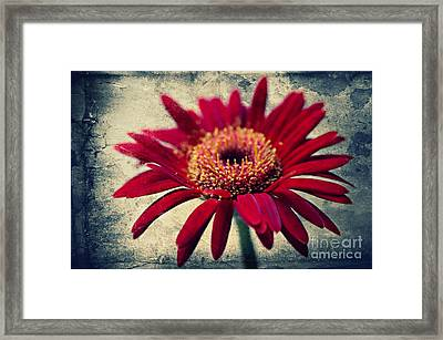 Gerbera Framed Print by Angela Doelling AD DESIGN Photo and PhotoArt