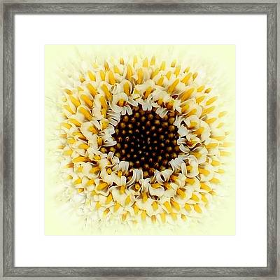 Gerbera Closeup Framed Print by The Creative Minds Art and Photography