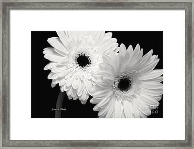 Gerbera Daisy Sisters Framed Print