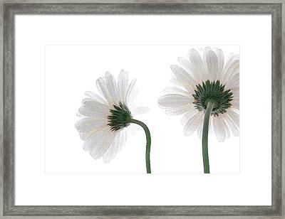 Gerbera Daisy I Framed Print