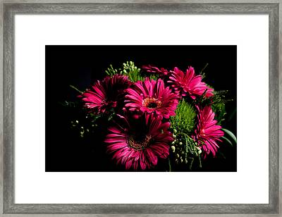 Gerbera Daisy Framed Print by Theodore Lewis