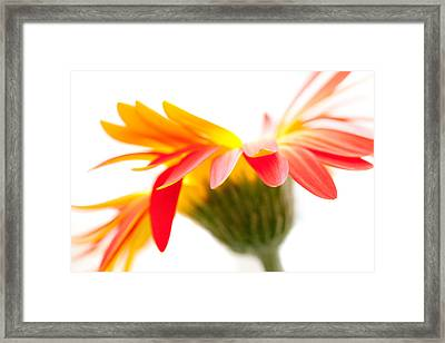 Gerbera Mix Crazy Flower - Orange Yellow Framed Print by Natalie Kinnear